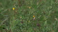 Pan up on swaying plant with thistles Stock Footage