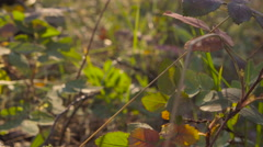 Upward pan from forest ground to plant level with streamig sunlight Stock Footage