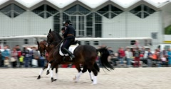 Two horses run synchronously Stock Footage