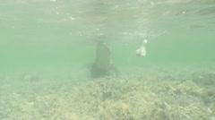 Sea Crocodile saltwater Cuba island Caribbean Sea Video Stock Footage