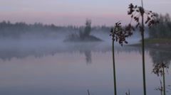 Fog settles over lake water with a wild plant in foreground Stock Footage