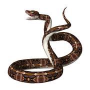 3D Rendering Gaboon viper on White Stock Illustration
