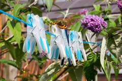Small Tortoiseshell butterfly on washing line pins. Stock Photos