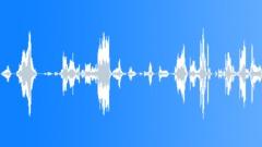Animals Lions Two Lions Low End Growl Calm Panting Exterior Dual Mono Sound Effect