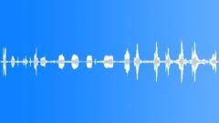 Animals Alpacas Mother Vocals Rare Cooing Baby Moans Sharp Smooth Onboard Attac Äänitehoste