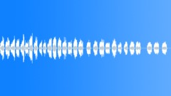 Birds Aplomado Falcon Male 2 Years Old Very Scared Scream Series Close POV MS Sound Effect
