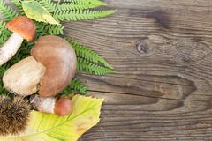 Mushrooms boletus and leccinum on wood background Stock Photos