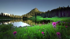 Wildflowers and Lake Tipsoo, Mount Rainier National Park, Washington Stock Footage