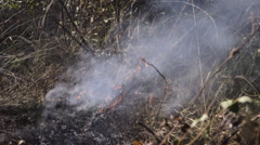 Grass and branches burn in forest fire aftermath Stock Footage