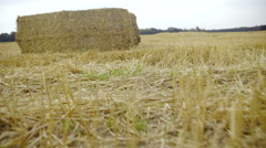 Camera move over hay to big harvested wheat field 4K Stock Footage