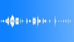 Animals Capuchin Monkey Scream Chatter Mutter Sound Effect