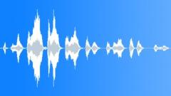 Animals Capuchin Monkey Scream Waver Sound Effect