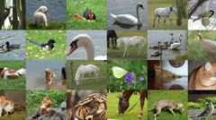 Slide show animals seamless loop video Stock Footage