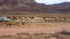 A rancher herding goats and sheep with his truck on the Navajo Reservation Stock Footage