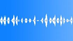 Animals Chickens Chirps Clucks Squeals Squawks Desperate Calls Suffering Stride Sound Effect