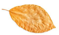 Autumn yellow fall leaf isolated on white, way in path Stock Photos