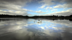 Pond with ducks reflecting sky and clouds Stock Footage
