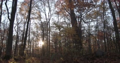 This video is about Autumn Forest Floor with Sun, Slider motion right, slow, Stock Footage