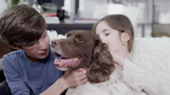 4K Young boy and girl giving lots of affection to their pet spaniel Stock Footage