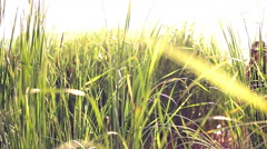 Girl black sunglasses goes across the field through tall grass Stock Footage