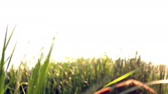 Girl black sunglasses goes across the field through tall grass portrait Stock Footage