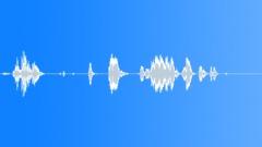 Groups American Indians Flute Shaman Bird Trill Weak1 Sound Effect