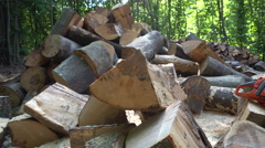 Pile of Chopped Firewood Logs in the Forest Stock Footage
