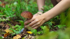Little girl cutting brown cap mushroom with a knife in the forest Stock Footage
