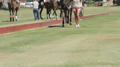 Female horse groomer walking a polo pony Stock Footage