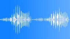 Animals Lions Single Growls Cadence Build Up Gradual Exterior Sound Effect