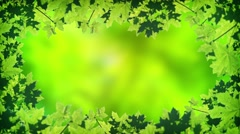 Abstract, Animated Frame of Summer Maple Leaves Stock Footage