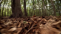 Forest Floor from the Perspective of a Small, Wild Animal Stock Footage