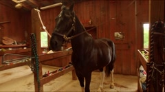 Horse in Saddling Bay Stock Footage