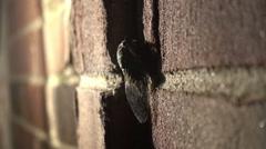 Cicada outside summer night Stock Footage