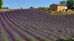 French Countryside House Near Lavender Field In Provence Southern France Stock Footage