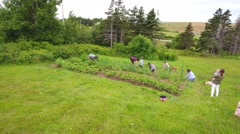 Aerial shot of a family in vegetable garden Stock Footage