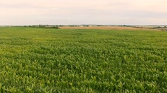 Flight over a field of corn Stock Footage