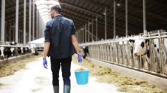 Cows and man with bucket of hay walking at farm Stock Footage
