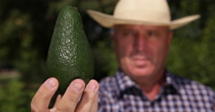 Farmer Showing Close View Green Ripe Avocado Best Healthy Fresh Exotic Fruit Stock Footage