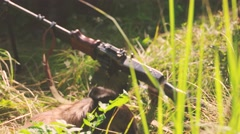 Dog in a military camp Stock Footage