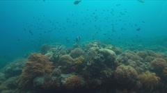 Yellowmargin Triggerfish Stock Footage