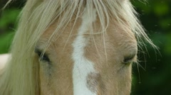 Palomino horse suit grazing in the pasture Stock Footage
