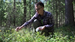 Guy collects wild bilberry in the forest (Vaccinium myrtillus). Stock Footage