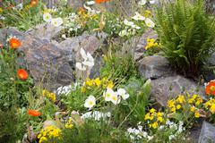 A natural and colorful spring flowerbed with rock Stock Photos