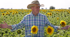 Proud Sunflower Farm Owner Looking Around Satisfied About Culture Abundance Stock Footage