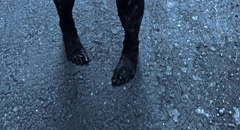 Zombies walking on the road. Zombie feet closeup. Stock Footage
