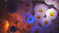 Flowers Transition  Animation  with Transparency ( Alpha Channel )  Stock Footage