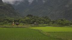 Vietnamese farmer shepherd walking the bull in rice fields of Sapa Mai Chau Viet Stock Footage