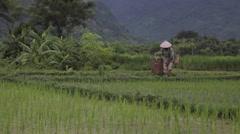 Farmer woman putting heavy basket on during harvest in Sapa Mai Chau Vietnam Stock Footage