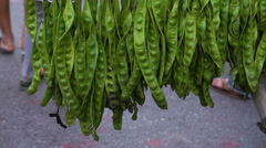 Stink bean, Sato bean or Parkia speciosa seed hanging in This market Stock Footage